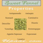 Sweet Fennel benefits and it's Uses