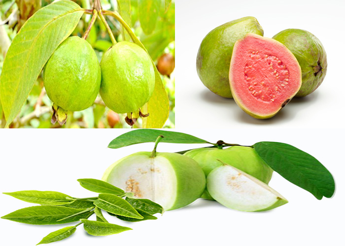 Nutrition facts and health benefits of guava